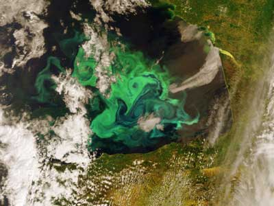 plankton bloom of the coast of Spain.