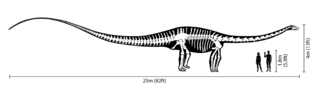 size of dinosaurs.